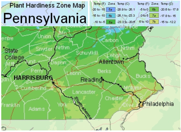 Best Time to Plant Trees in Pennsylvania