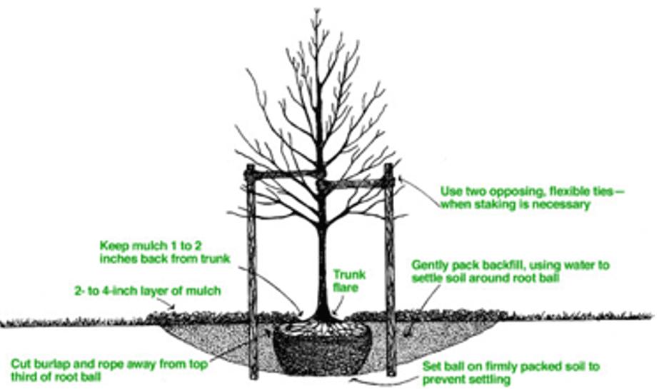 Tree Planting Service in Bucks County